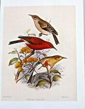 Frederick Frohawk Hawaiian Apapane Endemic Bird Print Offset Lithograph 13x10