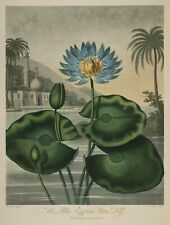 """Temple of Flora : """"The Blue Egyptian Water Lily"""" (1807) — Giclee Fine Art Print"""