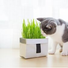 Pet Cat Grass Soilless Culture Growing Kit Cats Stomach Hairball Control Planter
