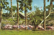 Old Vintage Flock Of Flamingos At Busch Gardens Tampa Florida Postcard