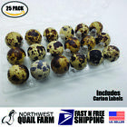 25 JUMBO Quail Egg Cartons, Holds 18 Eggs, Secure Snap Close, Fast Shipping!