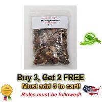 100 Moringa Seeds Bag 1 oz - US Customs Cleared Semillas de Moringa