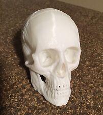 3D Printed Human Skull Replica