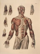"08 Anatomy Human Body Tutorials Map 14""x19"" Poster"