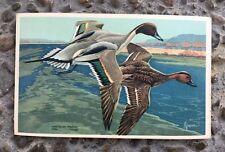 Vintage American Pintail Duck Wildlife Postcard Series #13 1939 No Postmark
