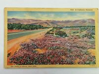 Vintage Postcard 1930's A California Highway The Desert in Bloom near Indio CA