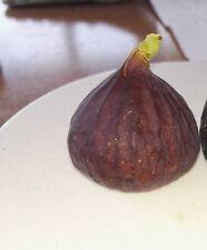 7 pcs. Cold hardy figs var. Ali Pasha cuttings