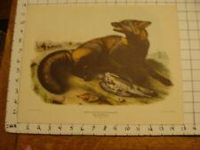 Vintage Audubon Print: AMERICAN CROSS FOX