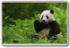 Giant Panda Fridge Magnet 03 Cute