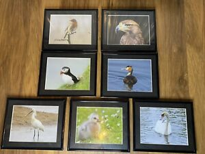 Exclusive Exhibit Photo Collection MJK Photography Birds Of The British Isles