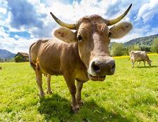 Zaunposter & Gartenposter Kuh, 100 x 75 cm (4 Ösen)