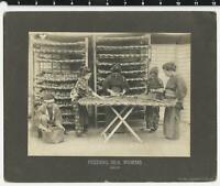 "Japan Gelatin Silver Cabinet ""Feeding Silkworms"" Philadelphia Museum"