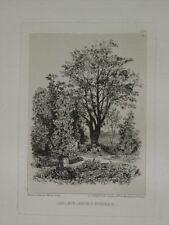 LALANNE (Maxime) - Dans mon jardin à Bordeaux - Eau-forte, 1872