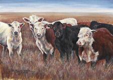 """Cattle Herd"" Note Cards-pack of 10 & envelopes, by artist, Julie Hammer"