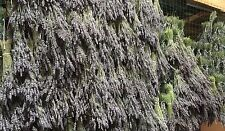 15 ounces Bulk Dried Lavender Buds California Grown No Pesticides Free Ship