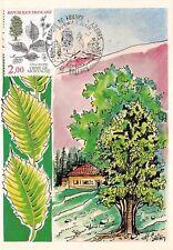 France (Ulmus Montana, Orme de Montagne) 1985  carte premier