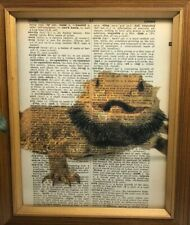 Vintage 1950s Dictionary Reptile Art Print  Collectible Bearded Dragon Picture