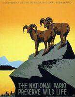 "Vintage Illustrated Travel Poster CANVAS PRINT National parks Wildlife 24""X18"""