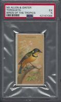 1889 N5 Allen & Ginter Birds of the Tropics Torquata Graded PSA 5
