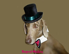 """The Aristocrat top hat and Bow Tie for large sized dogs with 16-18"""" collar size"""