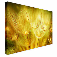 Soft Dandelions Flower Canvas Wall Art Picture Print
