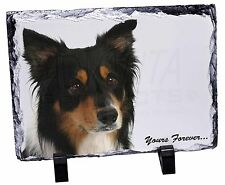 "Tri-colour Border Collie Dog ""Yours Forever..."" Photo Slate Christma, AD-CO33ySL"