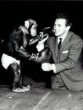1959 Original Photo boxer Gustav Scholz & Chimp from Sarrasani Circus in Berlin