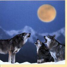 Klappkarte mit Umschlag: drei Wölfe heueln den Mond an - howling wolves