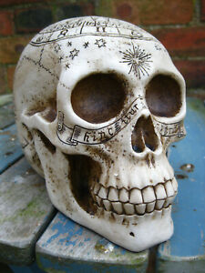 ZODIAC SKULL HEAD STATUE FIGURE Astrological GOTHIC ZODIAC Horror OCCULT TAROT