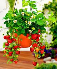 300 Pcs Seeds Red Strawberry Garden Big Vegetables Fruit Bonsai Creeper Plants O