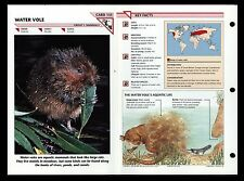 """Water Vole"" Wild Life Fact File Animal Card/Home School Study"