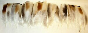 """19 ~ BROWN & BLACK SPECKLED ~ TURKEY FEATHERS ~ 6 to 7"""" ~ U.S. SELLER"""