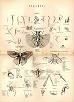 1880 Stampa ~ Naturale Storia ~Insetti~ Antenna Gambe Testa Conchiglia Ecc.