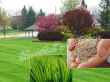 500g dur dur semence à gazon pelouse WEARING créer réparation ENHANCE MULTI PURPOSE