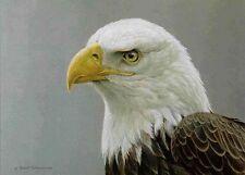 Bald Eagle Portrait  - Limited Edition Print  by Robert Bateman