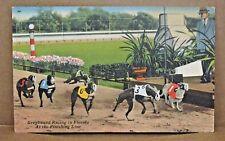 Vintage Postcard GREYHOUND RACING FLORIDA Dog Track Cleveland Ohio addr Tichnor