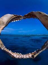 SHARKS JAW BONE SEA PHOTO ART PRINT POSTER PICTURE BMP1920B