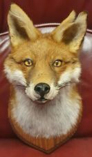 More details for taxidermy fox head