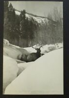 Mint Vintage Elk Cascade Creek Durango Colorado Real Picture Postcard