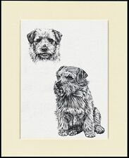 NORFOLK TERRIER LOVELY DOG PRINT MOUNTED READY TO FRAME #2