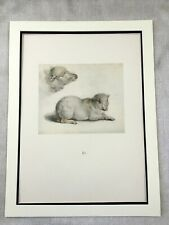 Antique Print Rare Drawing of a Lamb Sheep Hans Holbein the Younger Limited Edt