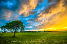 Nature Photography Print - Picture of Lone Tree and Storm Clouds in Texas