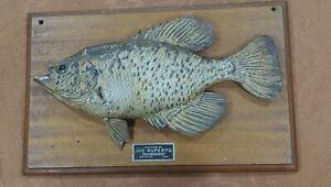 "VTG 14-1/2"" Black Crappie Fish Skin Mount Taxidermy JOE RUPERTO DES MOINES IOWA"