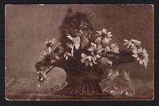 Cats Postcard RPPC signed C.E. Bullard kitten with basket of flowers 1908