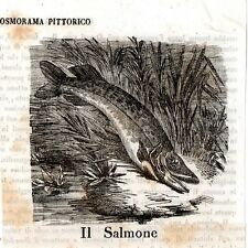 Stampa antica pesce SALMONE Cosmorama 1841 Old antique Print FISH