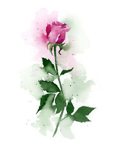 Pink Rose Floral Watercolor Painting Art Print by DJR