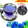 Dried Butterfly Pea Herbal Drink Tea Flower Quality Pure Organic Natural 1000g