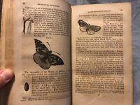 Outlines of Physiology 1839 Comstock. So many engravings! Animal, Insect, Human