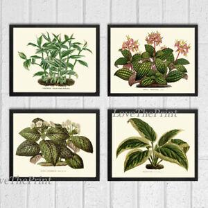 Unframed Botanical Print Set of 4 Antique Green House Plant Nature Home Wall Art