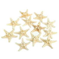 12 x White Knobby Starfish 5cm -7cm Sea Star Shell Beach Display Decor C4R5